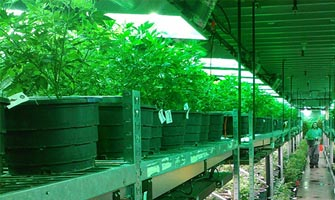 Chicago Law Blog: Buffalo Grove medical marijuana law